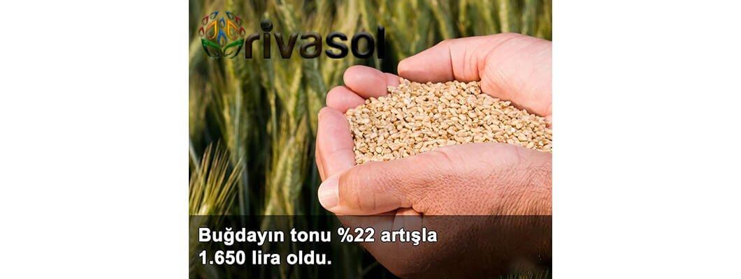 2020 Buğday Ton Fiyatı Ne Kadar? Buğday ve Bakliyat Alım Fiyatı ? | Rivasol