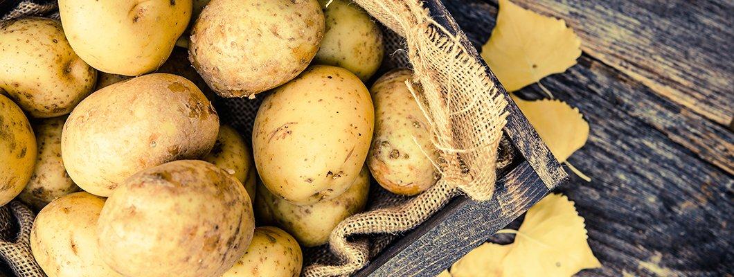 Azotlu Gübre ve Solucan Humusunun Patates Yumrusunda (Agria CV.) Vej | Rivasol