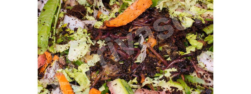 Çevreci Etkinliklerde Bugün: Kompost Yapıyoruz! | Rivasol
