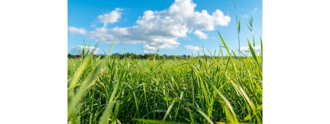 Doğal Solucan Gübresi İle Toprağın Su Tutma Kapasitesi Artar | Rivasol