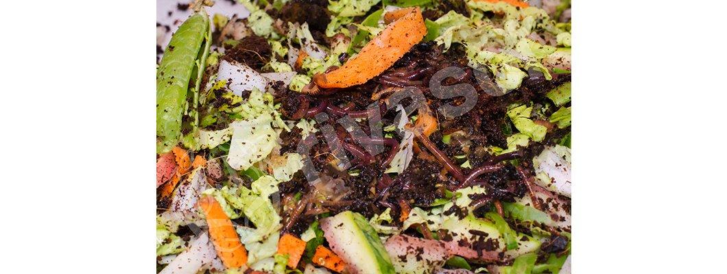 Kırmızı Kaliforniya Solucanları Nasıl ve Ne İle Beslenir? | Rivasol