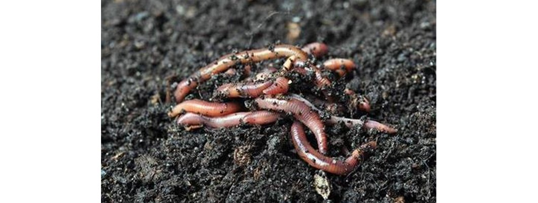 Medeniyetleri toprağa gömen bir hayvan: Solucan | Rivasol