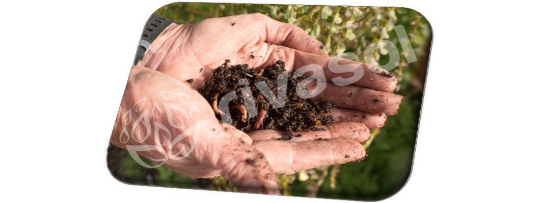 Solucan Gübresi İle Daha Sağlıklı Daha Doğal Ürünler Yetiştirin | Rivasol