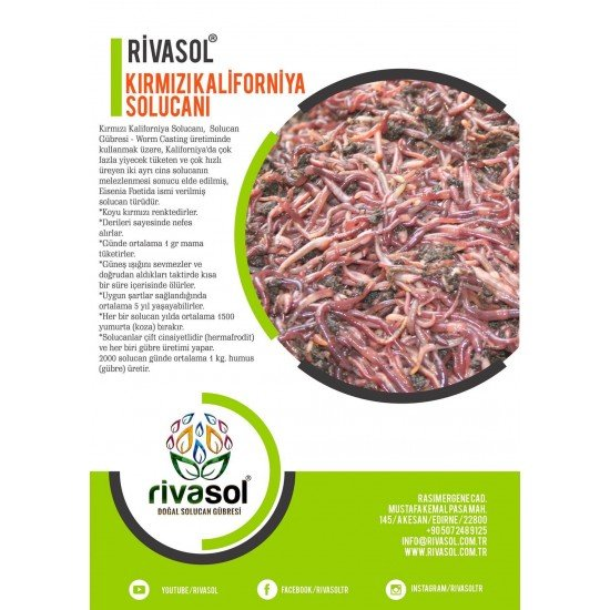 300.000 Adet Kırmızı Kaliforniya Solucanı (Eisenia foetida)  | Rivasol