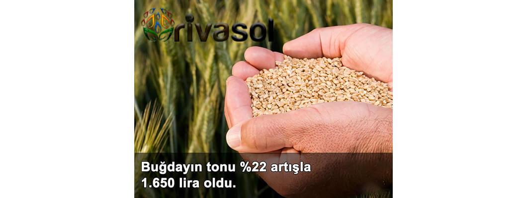 Buğday ve Bakliyat Alım Fiyatı Ne Kadar?