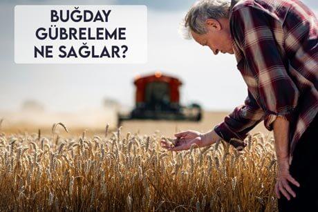 Buğday Gübreleme Ne Sağlar?