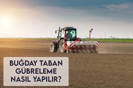Buğday Taban Gübreleme Nasıl Yapılır?