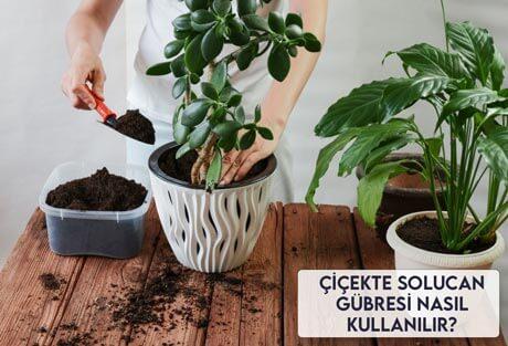 Çiçekte Solucan Gübresi Nasıl Kullanılır?