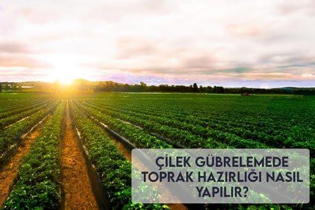 Çilek Gübrelemede Toprak Hazırlığı Nasıl Yapılır?