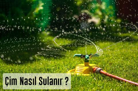 Çim Nezaman Sulanır? Çim Sulamanın Önemi?