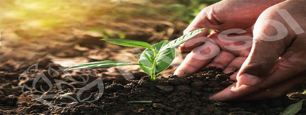 Solucan Gübresi Üretimi Başlangıç Nasıl Yapılır?