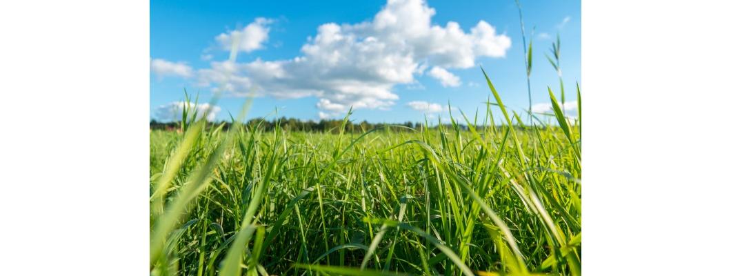 Rivasol ® Solucan Gübresi İle Toprağın Su Tutma Kapasitesi Artar