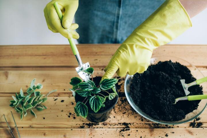 Bitki besini gübreleri ve solucan gübresinin Saksıda Bitki bakımındaki Önemi Nedir?