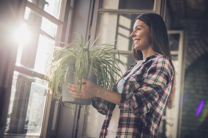 Işığın Saksıdaki Bitkiler İçin Önemi Nedir?
