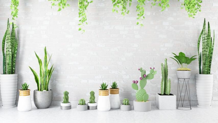 Saksı seçiminin Bitkiler İçin Önemi Nedir?