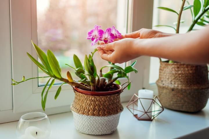 Orkide Nasıl Yerleri Sever