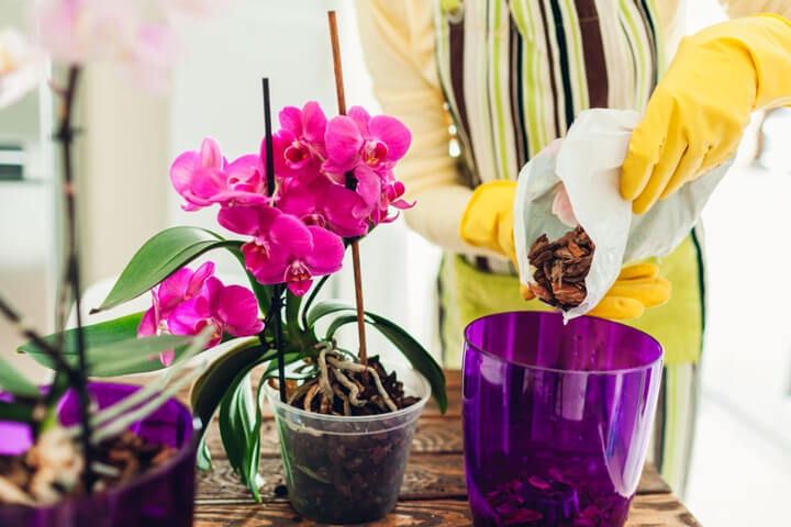 Orkide Saksıları Nasıl Olmalı, Nasıl Seçilmeli
