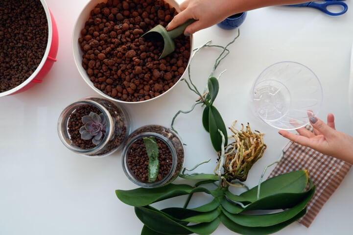 Orkide Toprağı Hazırlanır