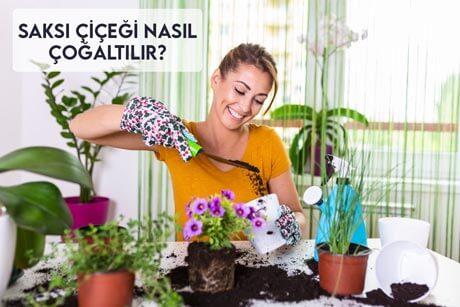 Saksı Çiçeği Nasıl Çoğaltılır?