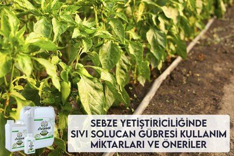 Sebze Yetiştiriciliğinde Sıvı Solucan Gübresi Kullanım Miktarları ve Önerileri