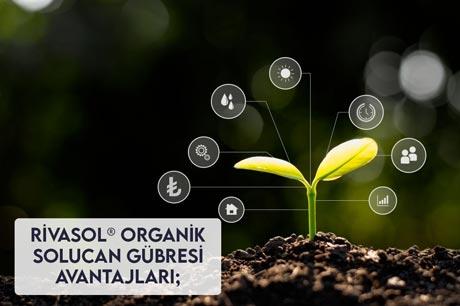 Organik Solucan Gübresi Avantajları Nedir?