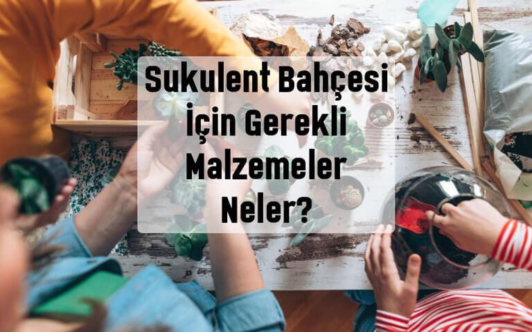 Sukulent bahçesi için gerekli malzemeler nelerdir?