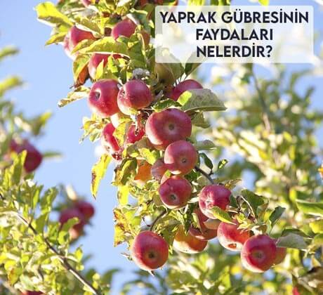 Yaprak Gübresinin Faydaları Nelerdir?