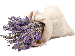 tibbi-ve-aromatik-bitkiler