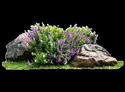 sus-bitkileri