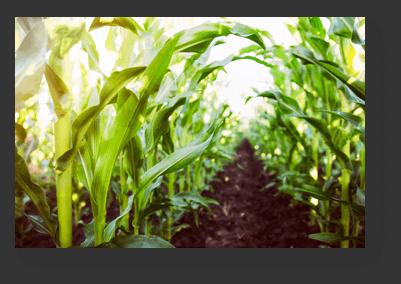 Solucan Gübresi Organik Besin Değerlerini ve Toprağı Düzenler